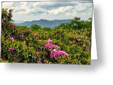 Catawba Rhododendrons Greeting Card