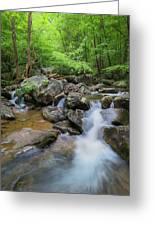 Catawba Stream In Pisgah National Forest Greeting Card