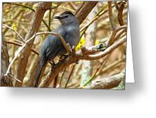 Catbird In Spring Greeting Card