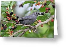 Catbird Scores A Mulberry Greeting Card