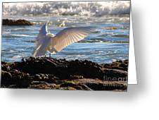 Catching Rays At The Beach Greeting Card