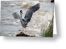 Catching The River Breeze Greeting Card