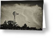 Catching The Updraft Greeting Card