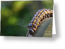 Macro -caterpillar Greeting Card
