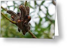 Caterpillar Group Hug Greeting Card