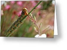 Caterpillar Munching Greeting Card