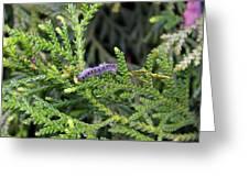 Caterpillar On Branch Greeting Card
