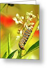 Caterpillar Stage 2 Greeting Card