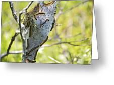 Caterpillars #2 Greeting Card by Stephanie  Varner