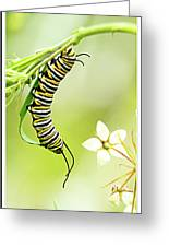 Caterpiller On Plant Greeting Card