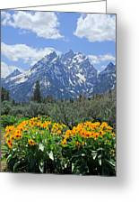 Dm9328-cathedral Group Tetons  Greeting Card