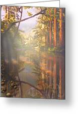 Cathedral Redwoods Greeting Card