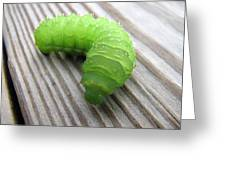 Catipillar 2 Greeting Card
