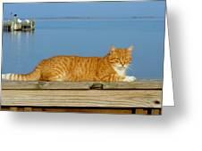 Cats 29 Greeting Card by Joyce StJames