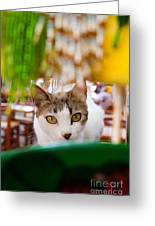Cat's Eye On Me Greeting Card