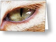 'cats Eye' Greeting Card