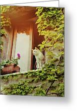 Cats Eye View Greeting Card