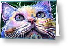 Cats Eyes 2 Greeting Card