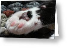 Cats Paw Greeting Card