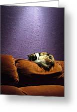 Cats Sleep In Odd Places Greeting Card