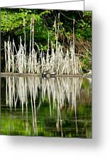 Cattail Reflection Greeting Card