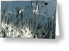 Cattail Sky Greeting Card