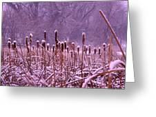Cattails Ala Mode Greeting Card