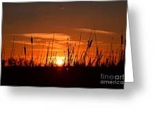 Cattails And Twilight Greeting Card