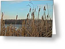 Cattails At Skymount Pond Pa Greeting Card