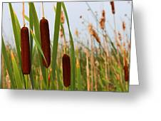 Cattails Delight Greeting Card