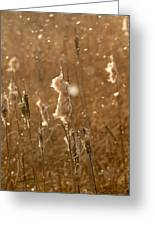 Cattails In Snowstorm 3 Greeting Card