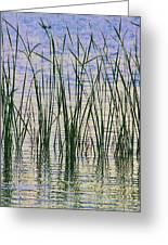 Cattails In The Lake Greeting Card