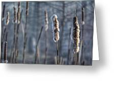 Cattails In The Winter Greeting Card