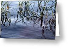 Cattails1 Greeting Card