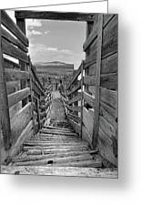 Cattle Chute Greeting Card
