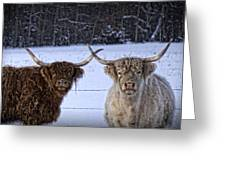 Cattle Cousins Greeting Card