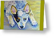 Cattle Dog Puppy Greeting Card