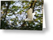 Cattle Egret In Flight Greeting Card