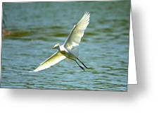 Cattle Egret Right Banking Turn - Digitalart Greeting Card