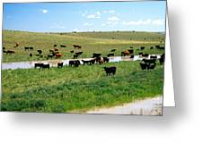 Cattle Graze On Reclaimed Land Greeting Card