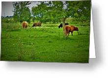 Cattle Grazing In A Lush Pasture Greeting Card
