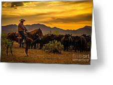 Cattle Drive 41 Greeting Card