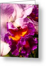 Cattleya IIi Greeting Card