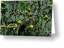 Catus Blossoms Greeting Card