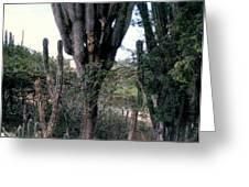Catus Trees Greeting Card