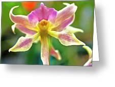 Caucaea Rhodosticta Orchid Greeting Card