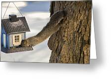 Caught At The Bird Feeder Greeting Card