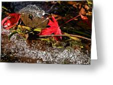 Caught In The Waterfall Greeting Card