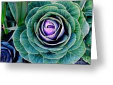 Cauliflower Abstract #6 Greeting Card