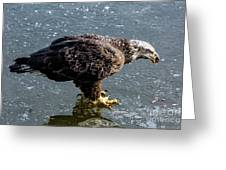 Cautious Eagle Greeting Card